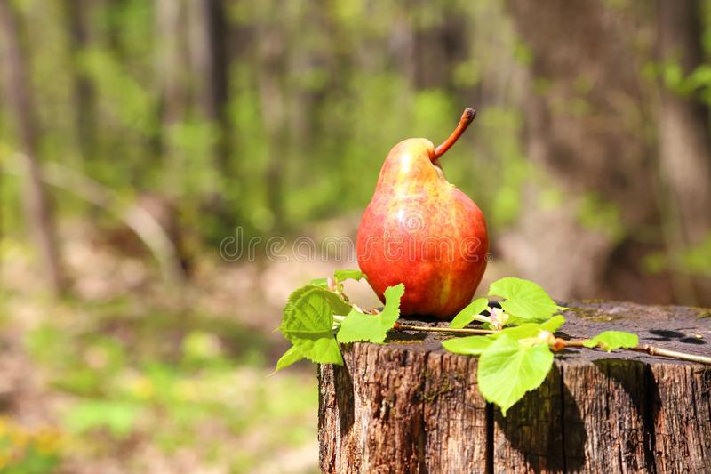 A fresh ripe red pear of the original form lies on a stump on a stock photo
