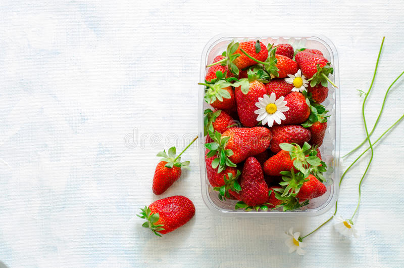 Fresh ripe strawberries and Chamomile flowers in plastic box on blue background royalty free stock image