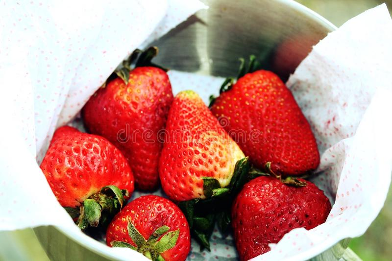 Fresh ripe strawberries in a silver bowl stock images