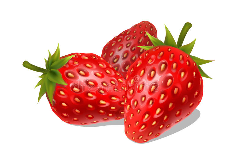 Fresh ripe strawberries on a white background vector illustration