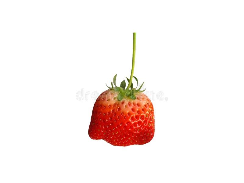 Fresh ripe strawberry isolated on white background. stock images