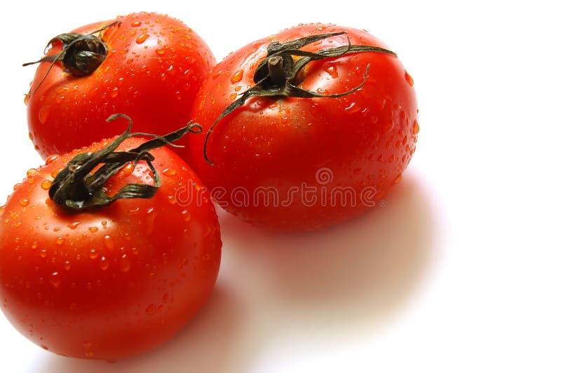 Fresh Ripe Tomatoes Stock Images