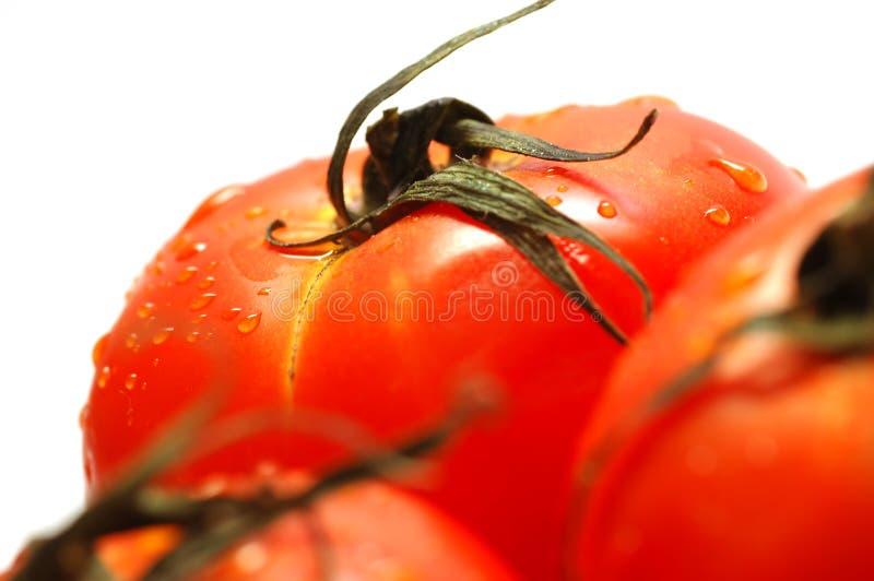 Fresh ripe tomatoes