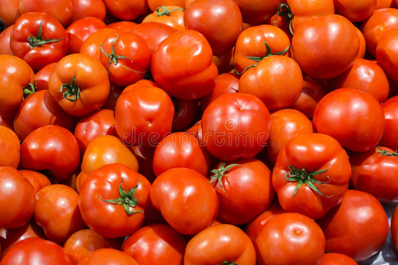 Fresh Ripe Tomatoes royalty free stock photo