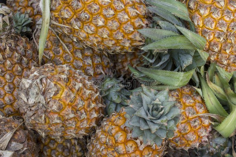 A Fresh ripe yellow pineapples with green leaves lie in a heap. natural surface texture stock photo