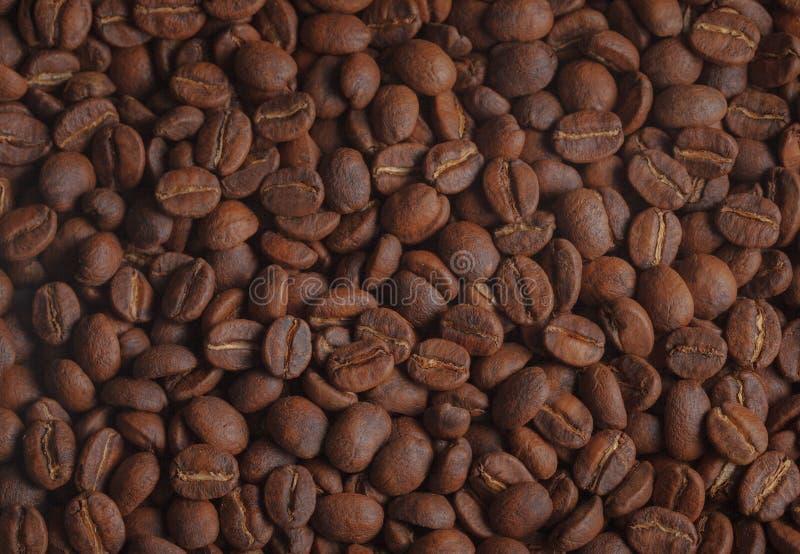 Fresh roasted Coffee beans royalty free stock photos