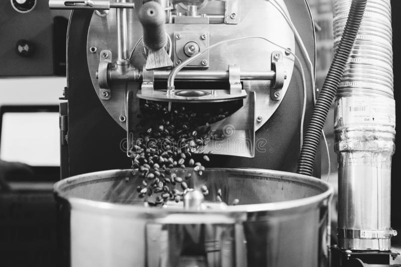 Fresh Roasted Natural Coffee Beans Cascading out of Industrial Coffee Bean Roaster Machine Inside the Coffee Shop. Fresh Roasted Natural Coffee Beans Cascading stock photography