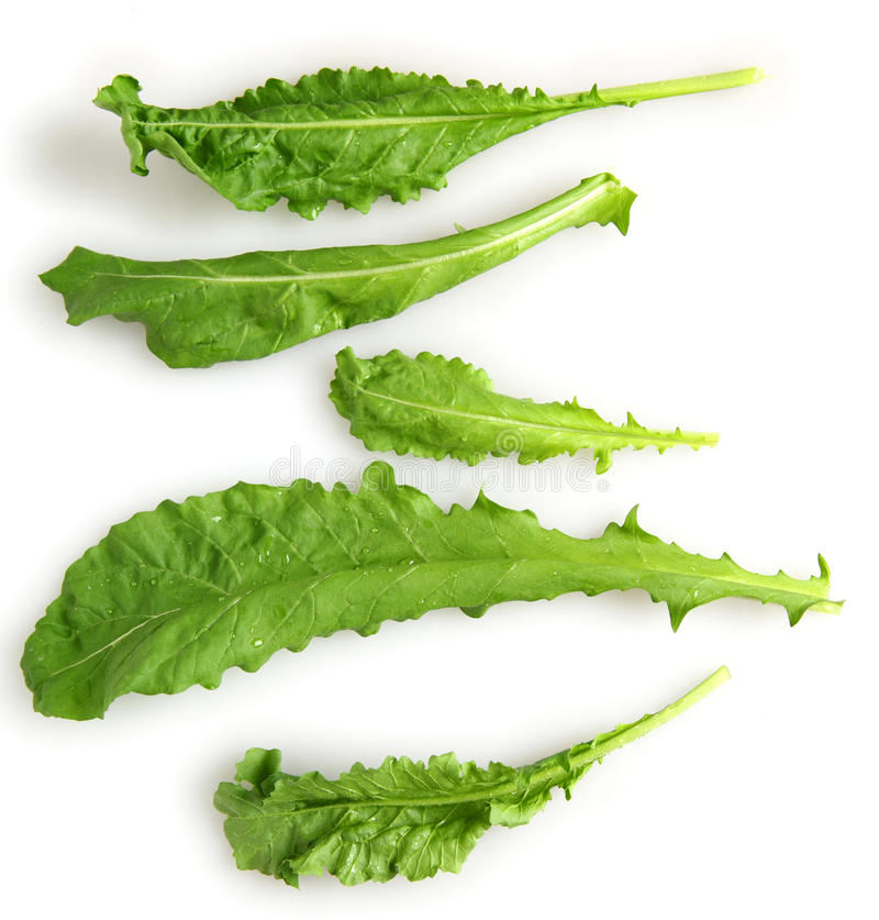 Download Fresh rocket leaves stock photo. Image of fresh, green - 18545118