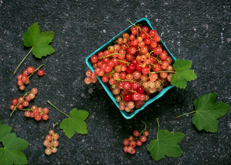 Fresh rosa and white currant berries in a turquoise  paper box. stock photo