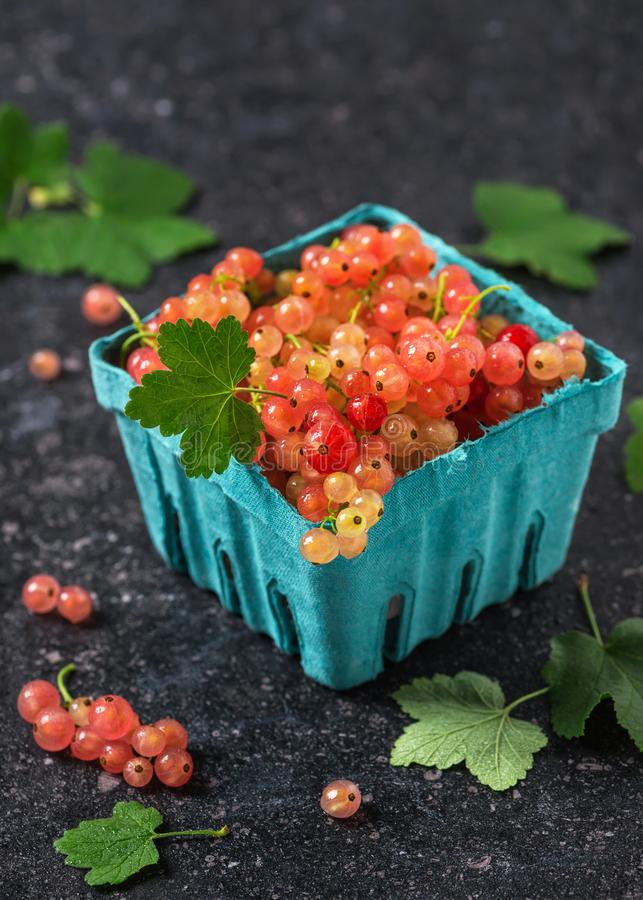 Fresh rosa and white currant berries with water drops in a turquoise cardboard box. Fresh rosa and white currant berries with water drops in a turquoise stock photo