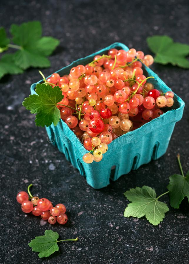 Fresh rosa and white currants in a cardboard box. stock images
