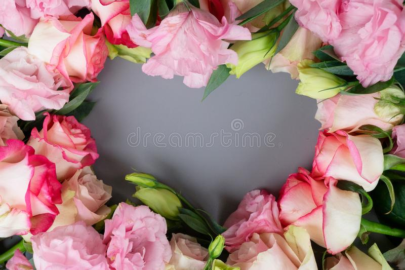 Fresh rose flowers on gray royalty free stock photo