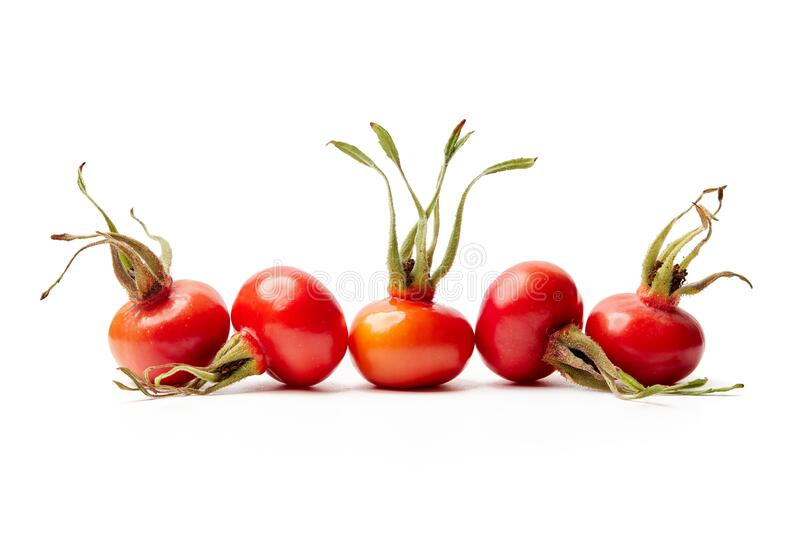 Fresh rose hips from Rosa Rugosa on white background stock image