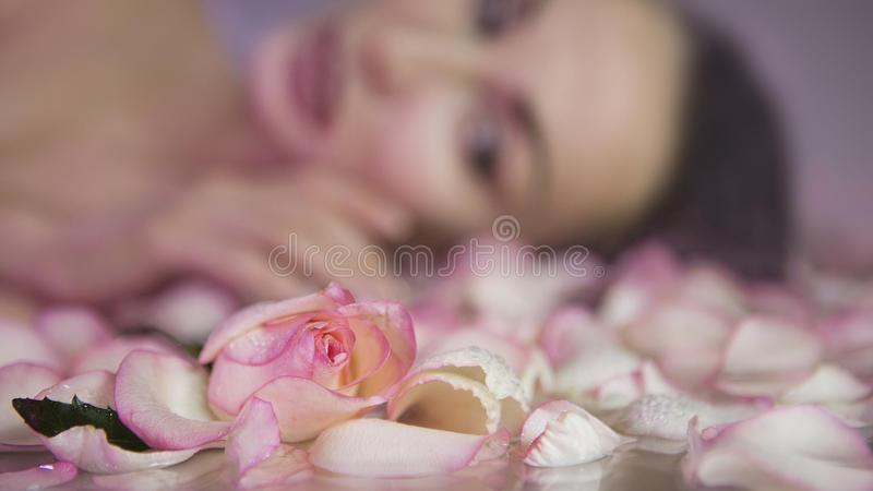 Fresh Rose petals and pink rosebud. Blurred Woman face with clean Healthy skin on background stock photo