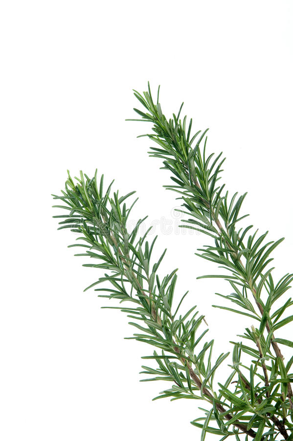 Download Fresh rosemary stock image. Image of herb, rosemary, food - 12993633