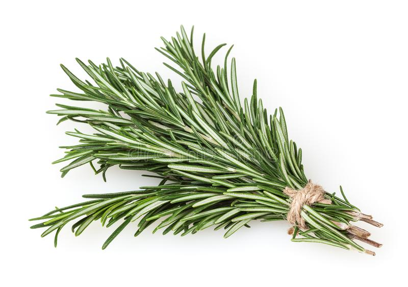 Fresh rosemary bunch on white royalty free stock photo