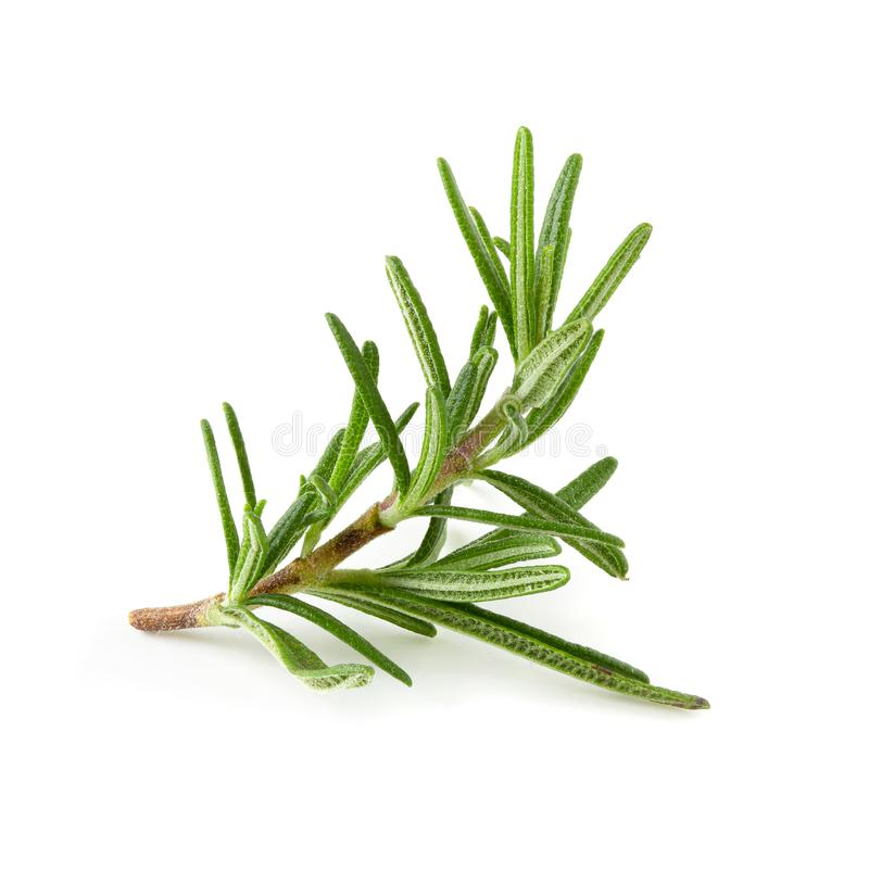 Fresh Rosemary isolated over a white background royalty free stock photography