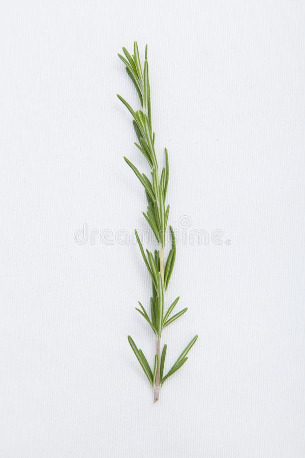 Fresh rosemary isolated on white background. royalty free stock photography