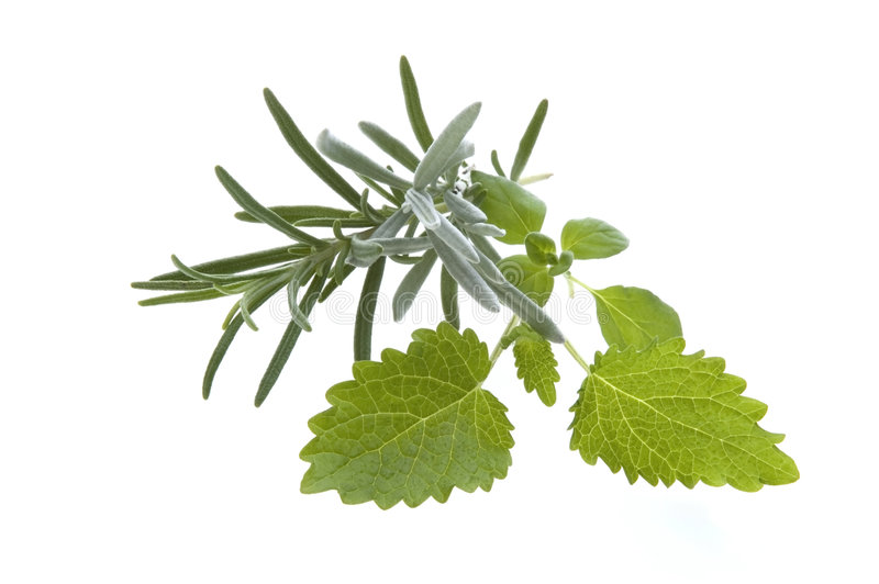 Download Fresh Rosemary And Lemon Balm Stock Photo - Image: 2335798