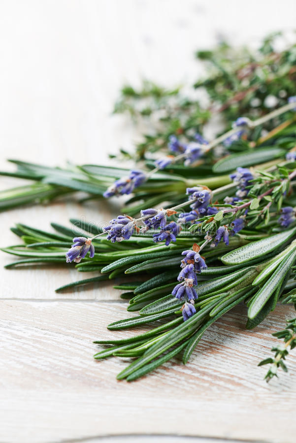 Fresh rosemary, thyme and dried lavender. Close up of fresh rosemary, thyme and dried lavender flowers royalty free stock image