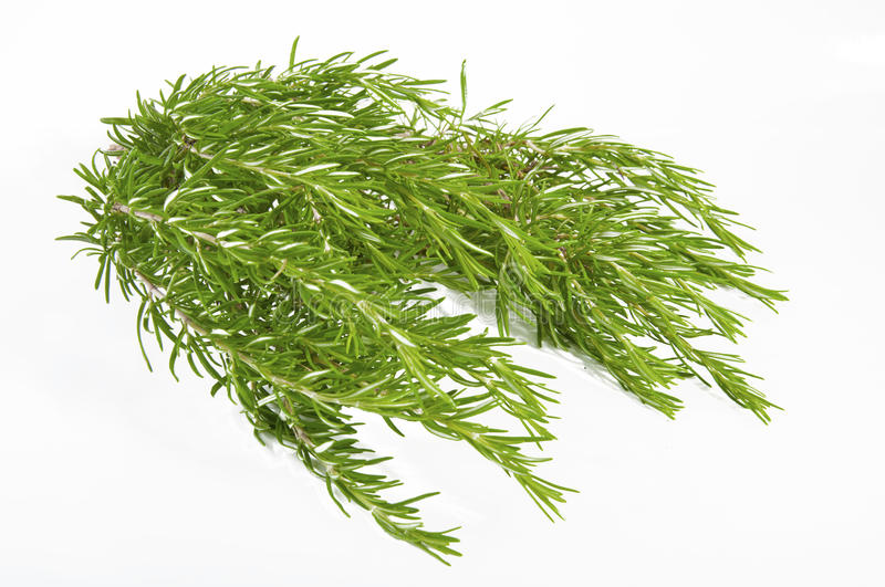 Download Fresh Rosemary On White Background Royalty Free Stock Images - Image: 25209419