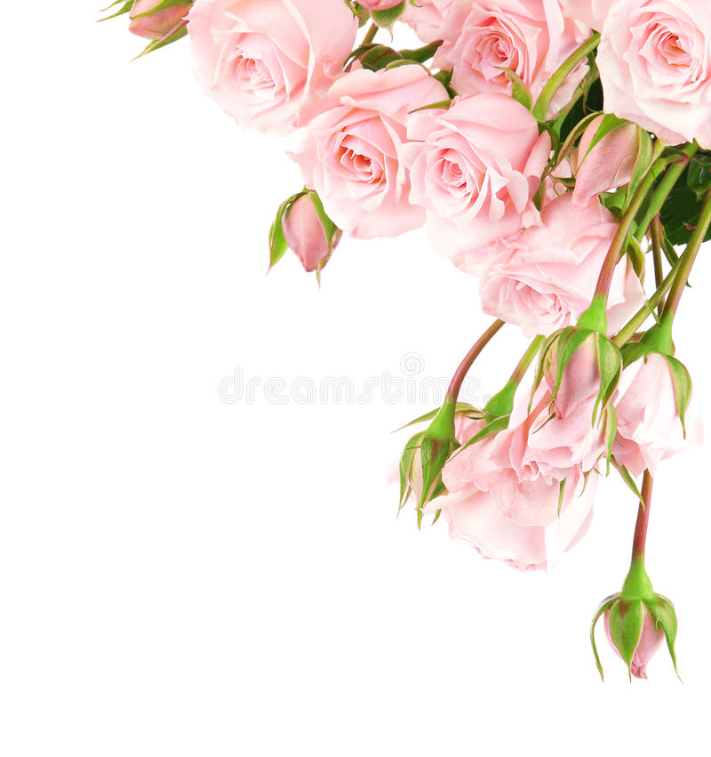 Fresh roses border royalty free stock images
