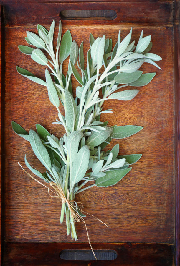 Download Fresh Sage Plant On Wooden Table Stock Image - Image: 35743913
