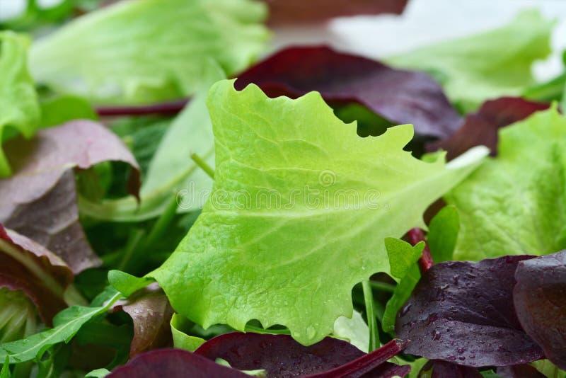 Fresh salad of mixed tender leaf vegetables stock image
