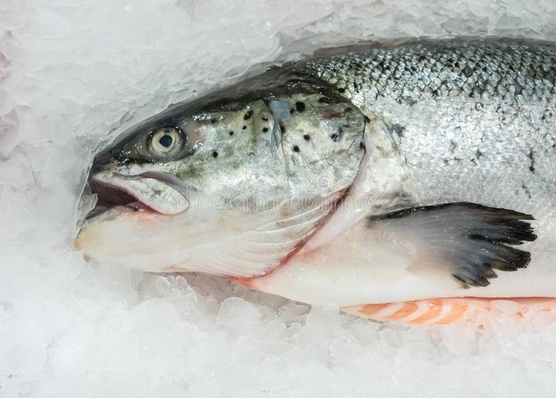 Fresh salmon on ice in the market stock photography