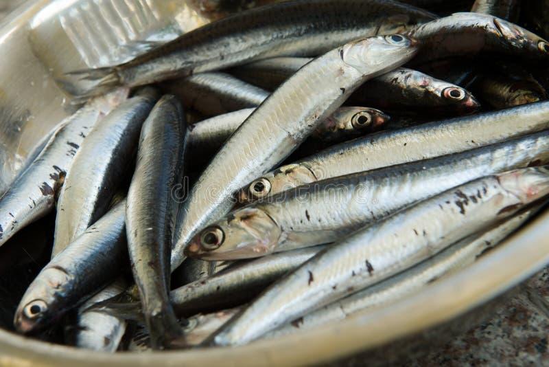 Fresh Sardine. In a bowl stock image