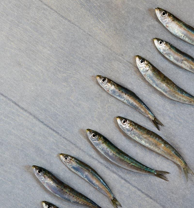 Fresh sardine. Laying in a row diagonally on wooden table stock photos