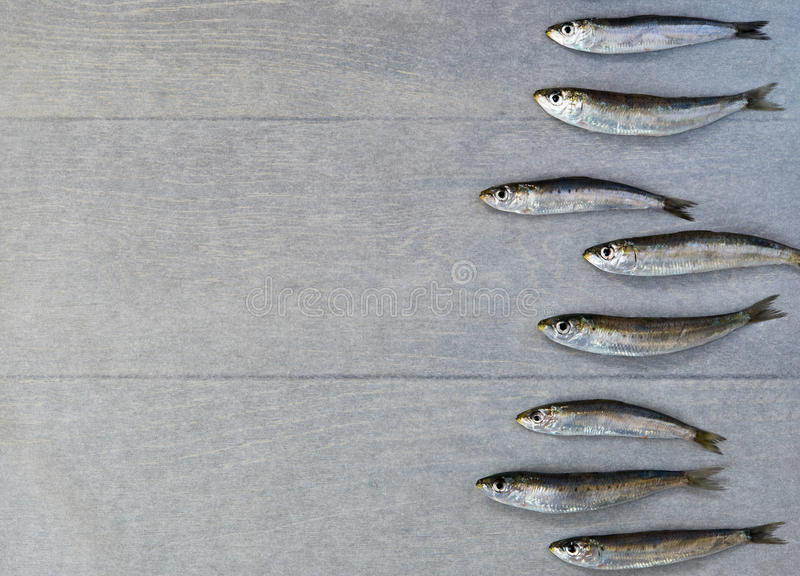 Fresh sardine. Laying in row from right side of wooden table royalty free stock photos