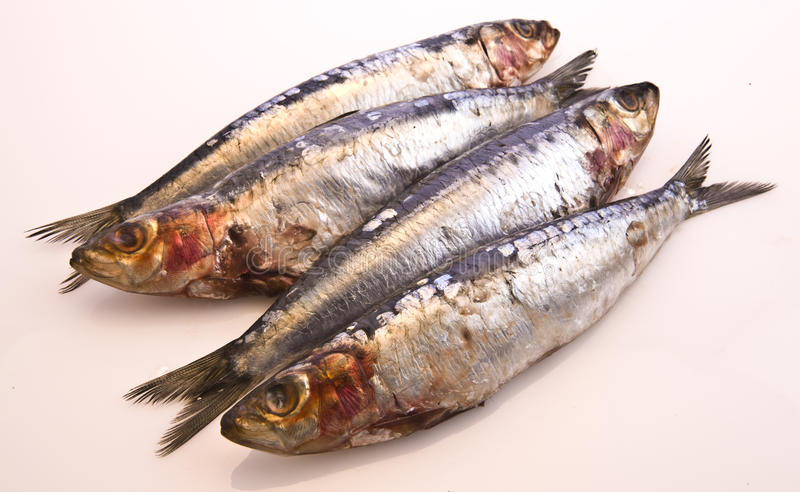 Download Fresh Sardines stock photo. Image of catch, ingredient - 11535966