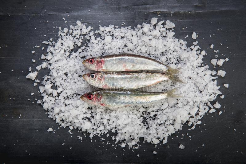 Fresh sardines on a coarse salt layer over a slate background stock photography