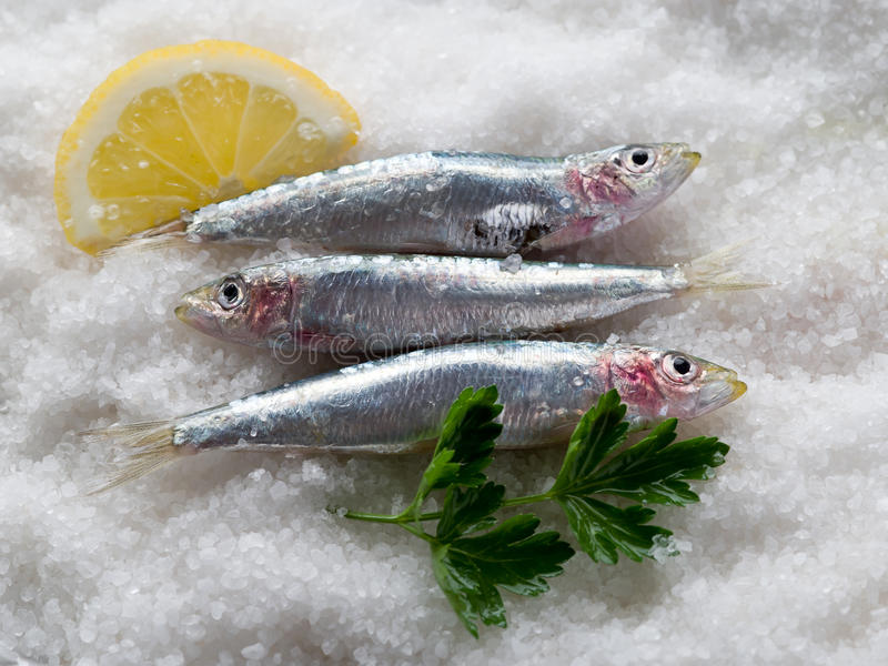 Fresh sardines over salt stock photos