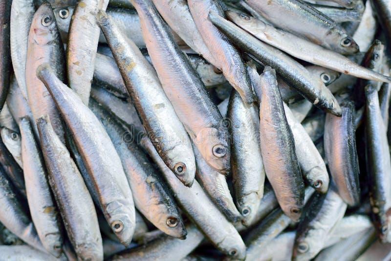 Fresh sardines stock photos