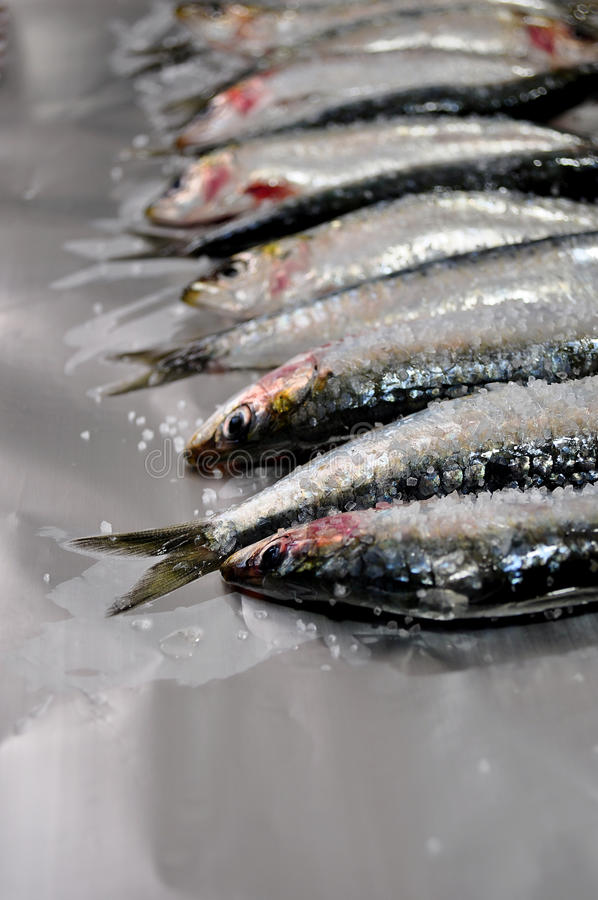 Fresh sardines with salt stock photos