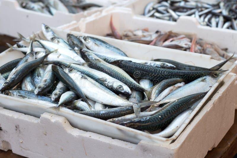 Fresh sardines. South italian fish market royalty free stock photography