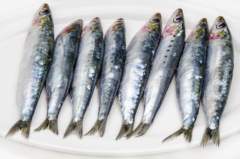 Fresh sardines. Still Life with fresh sardines stock photo