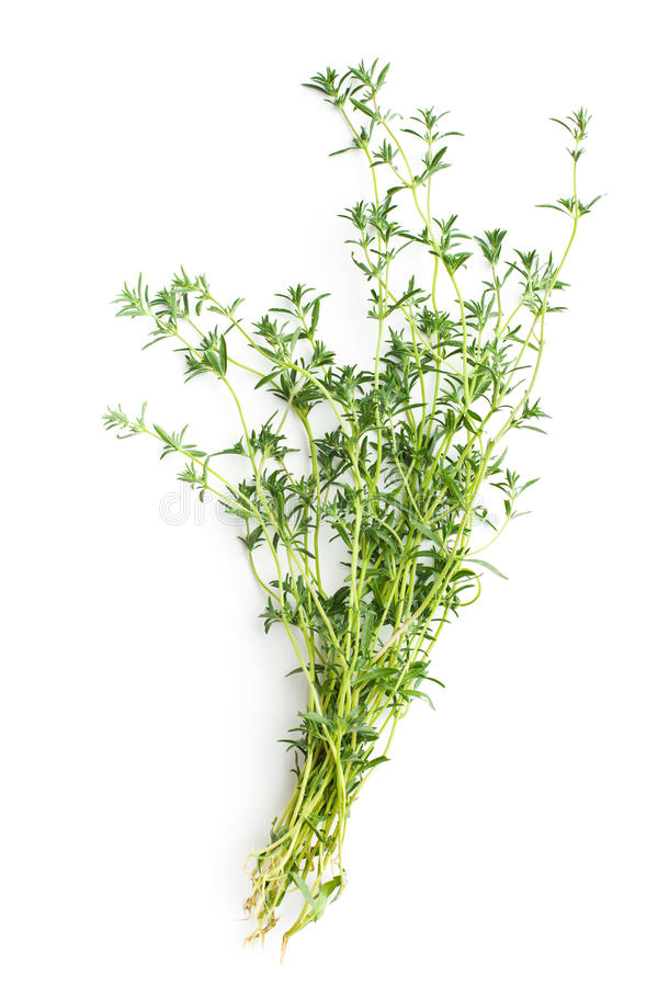 Fresh savory bunch stock images