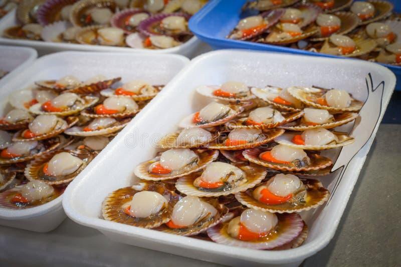 Fresh scallops Variegated scallop in Santiago de Compostela, Galicia stock photos
