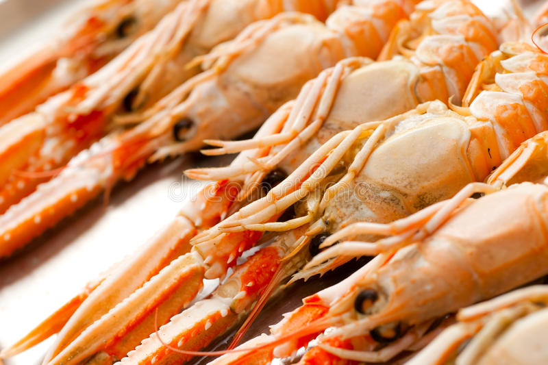 Fresh Scampi stock image