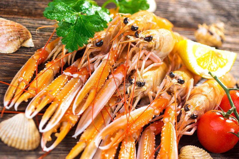Fresh Scampi / Nephrops norvegicus stock photography