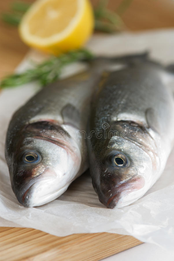 Fresh sea bass. Two fresh sea bass with lemon and rosemary stock image