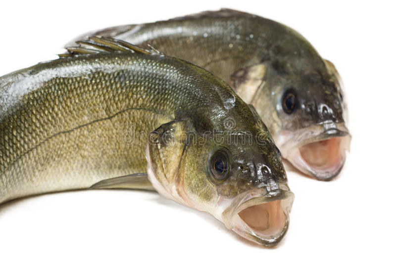 Download Fresh sea bass stock photo. Image of cook, couple, recipe - 28527744