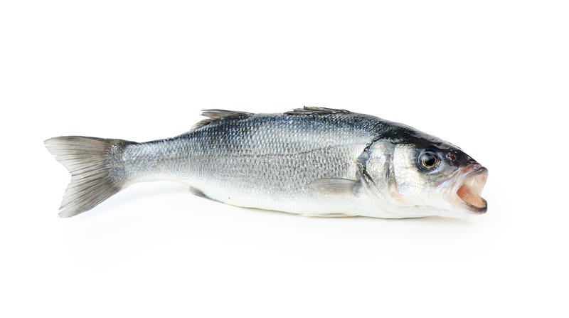 Fresh sea bass fish. Isolated on white stock image