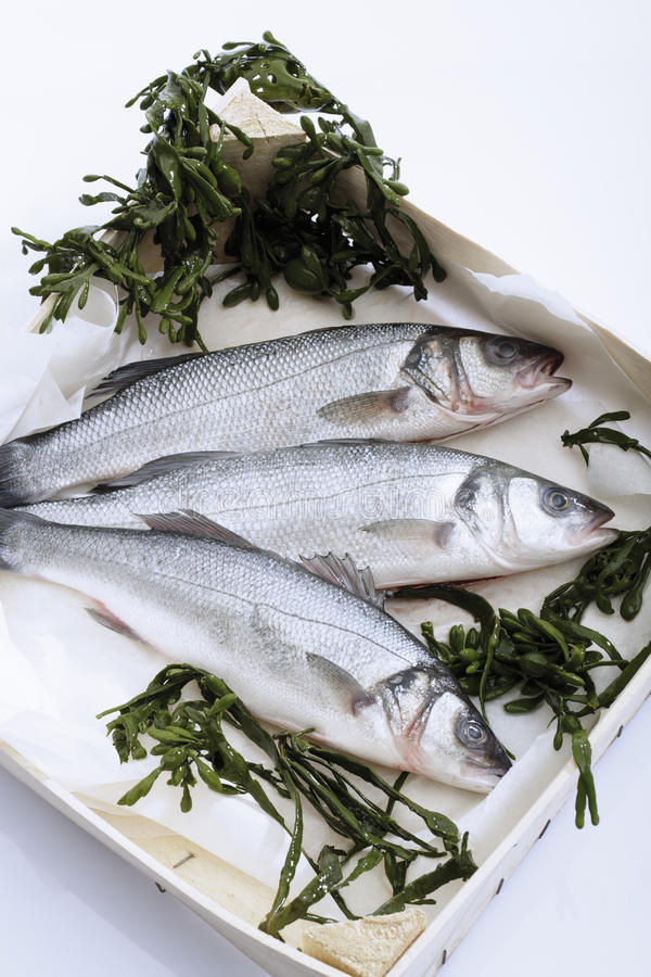 Fresh sea bass with sea weed royalty free stock photo