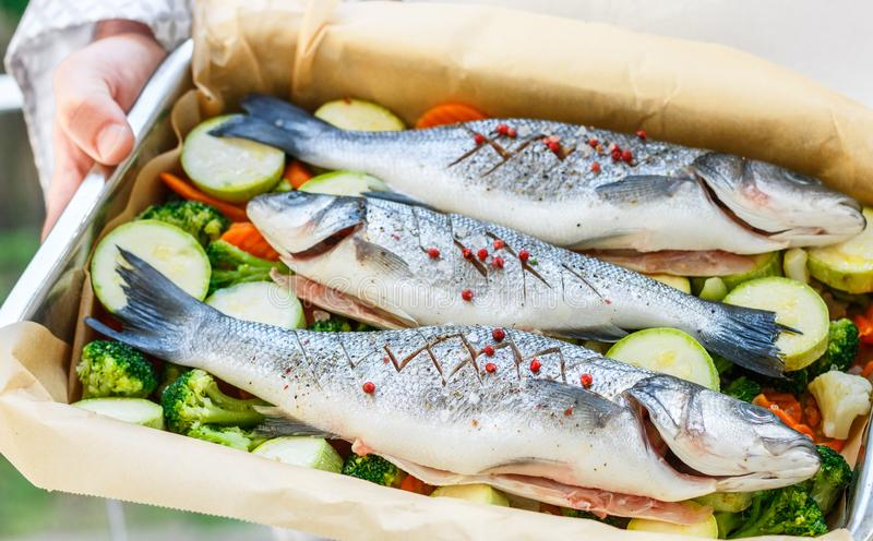 Fresh sea bass seabass is ready for baking with vegetables. Broccoli, cauliflower, zucchini and carrots. The metal form in the hands of the cook. Selective royalty free stock photography