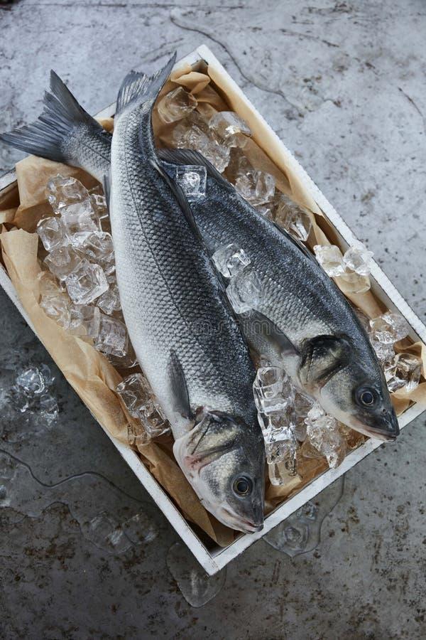 Fresh sea bass stock images