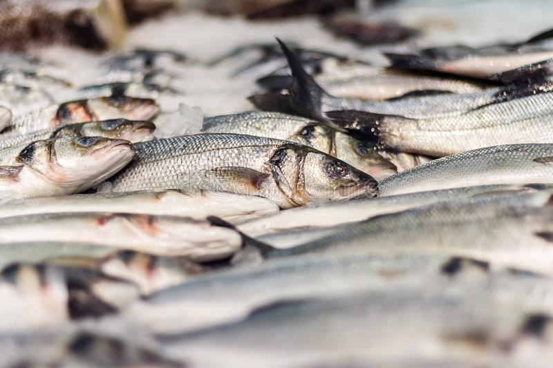 Fresh sea fish in ice. In supermarket stock photography